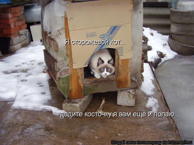 Котоматрица: Я сторожевой кот... дадите косточку я вам ещё и полаю...