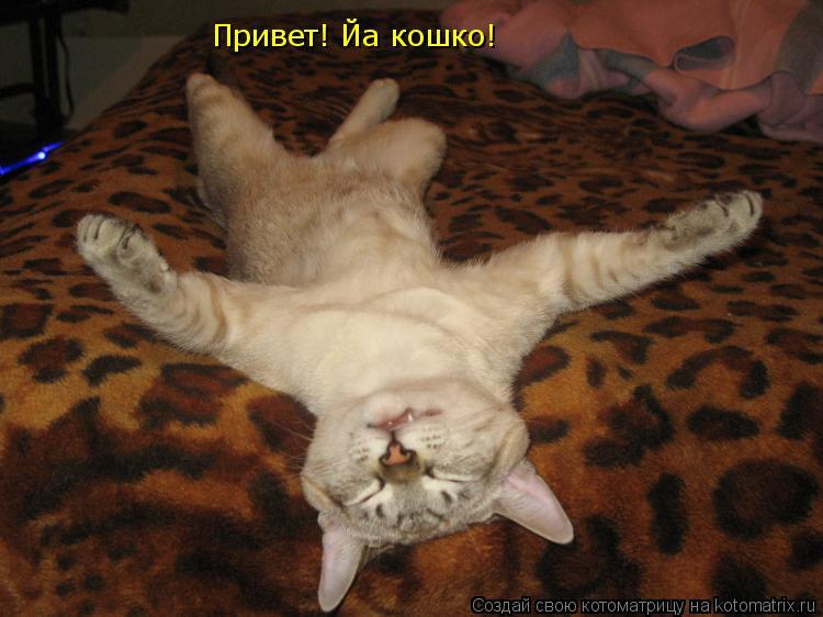 Котоматрица: Привет! Йа кошко!