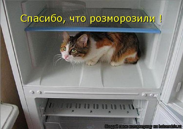 Котоматрица: Спасибо, что розморозили !