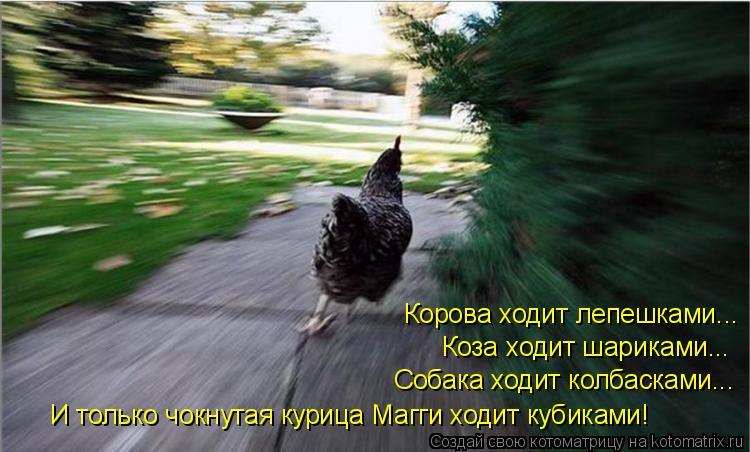 Котоматрица: Корова ходит лепешками... Коза ходит шариками... Собака ходит колбасками... И только чокнутая курица Магги ходит кубиками!