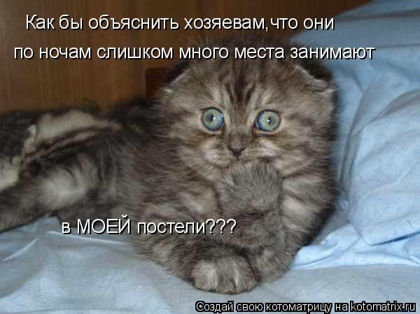 Котоматрица: Как бы объяснить хозяевам,что они по ночам слишком много места занимают в МОЕЙ постели???