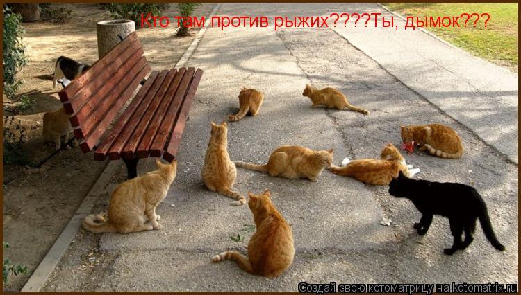 Котоматрица: Кто там против рыжих????Ты, дымок???