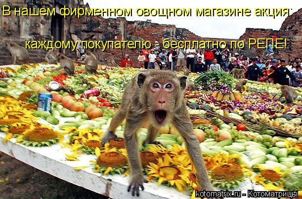 Котоматрица: В нашем фирменном овощном магазине акция: каждому покупателю - бесплатно по РЕПЕ!