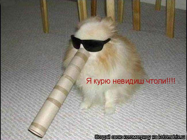 Котоматрица: Я курю невидиш чтоли!!!!