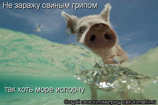Котоматрица: Не заражу свиным грипом так хоть море испорчу