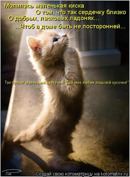 Котоматрица: Молилась маленькая киска О том, что так сердечку близко О добрых, ласковых ладонях... ...Чтоб в доме быть не посторонней... Так просит маленьки