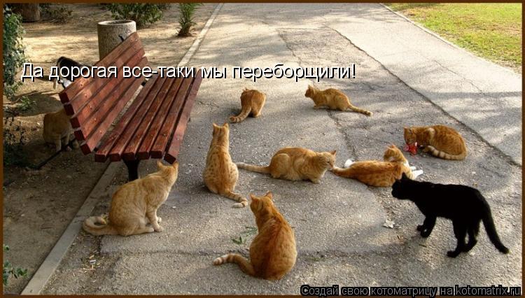 Котоматрица: Да дорогая все-таки мы переборщили!