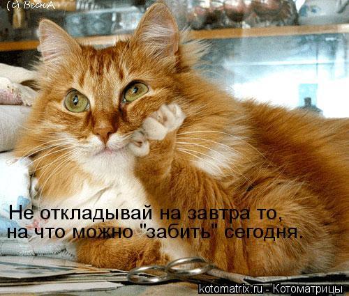 """Котоматрица: Не откладывай на завтра то,  на что можно """"забить"""" сегодня."""