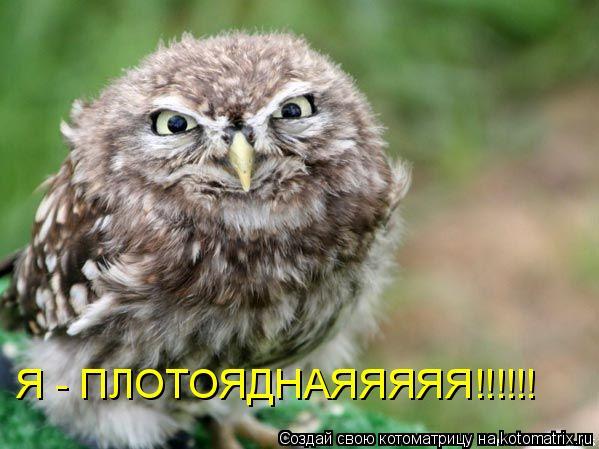 Котоматрица: Я - ПЛОТОЯДНАЯЯЯЯЯ!!!!!!