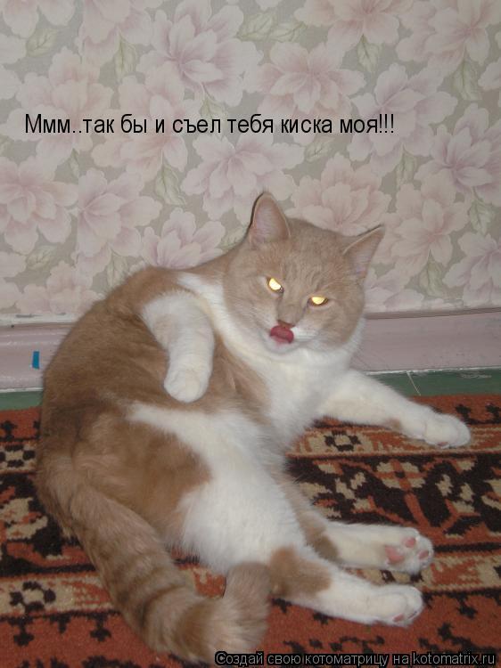 Котоматрица: Ммм..так бы и съел тебя киска моя!!!