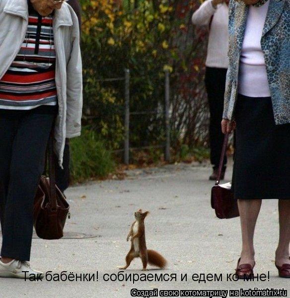 Котоматрица: Так бабёнки! собираемся и едем ко мне!