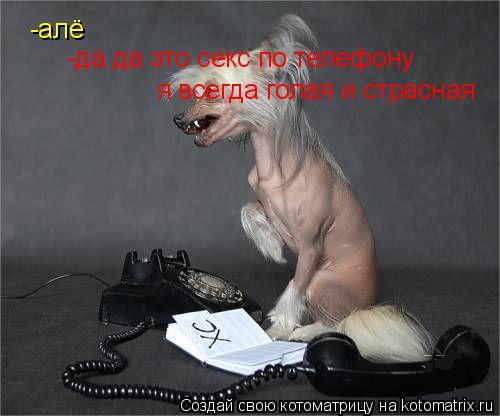 Котоматрица: -алё -да да это секс по телефону я всегда голая и страсная