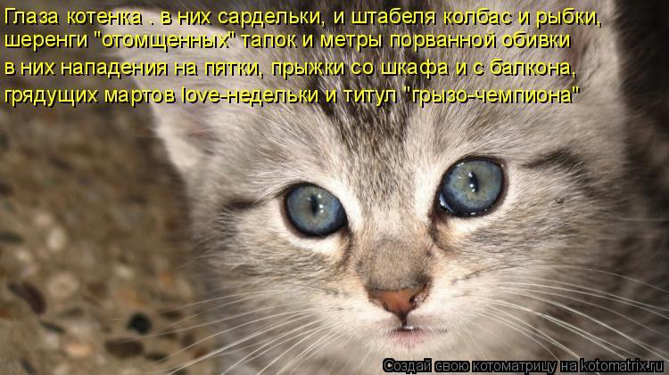 """Котоматрица: Глаза котенка – в них сардельки, и штабеля колбас и рыбки, шеренги """"отомщенных"""" тапок и метры порванной обивки в них нападения на пятки, прыж"""
