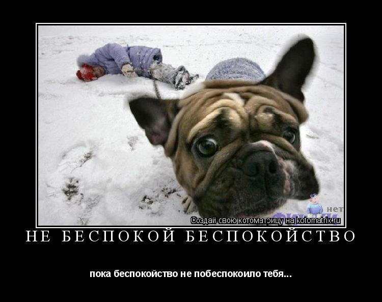Котоматрица: Не беспокой беспокойство пока беспокойство не побеспокоило тебя...