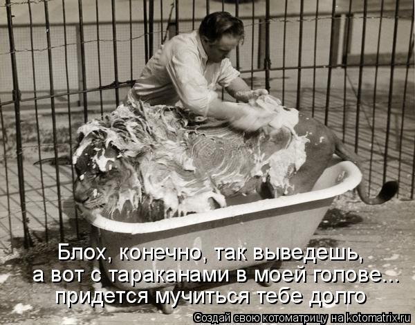 Котоматрица: Блох, конечно, так выведешь, придется мучиться тебе долго а вот с тараканами в моей голове...