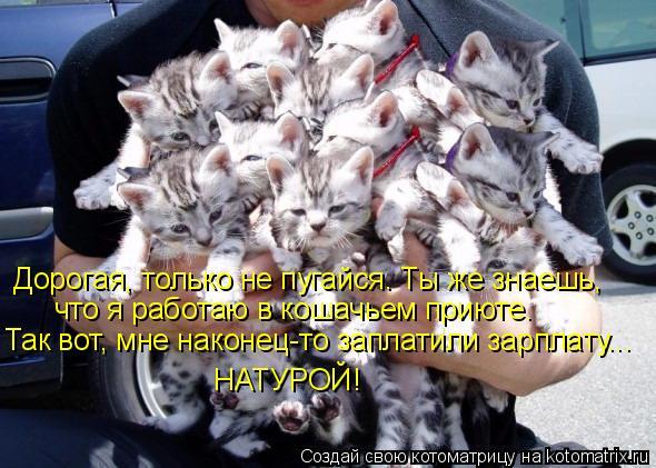Котоматрица: Дорогая, только не пугайся. Ты же знаешь, что я работаю в кошачьем приюте. Так вот, мне наконец-то заплатили зарплату... НАТУРОЙ!