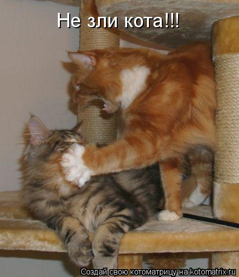 Котоматрица: Не зли кота!!!