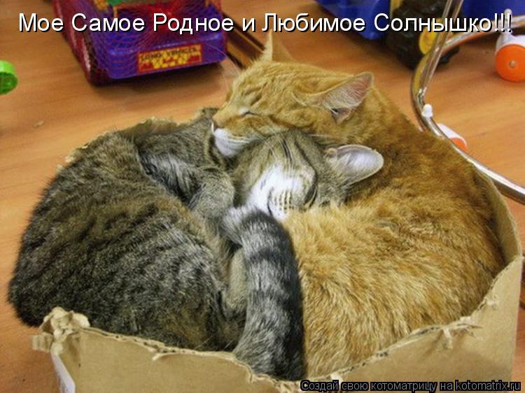Котоматрица: Мое Самое Родное и Любимое Солнышко!!!
