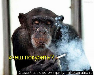 Котоматрица: хчеш покурить?
