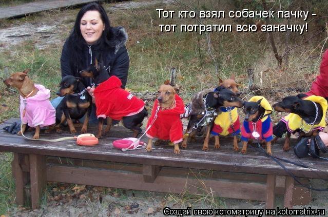 Котоматрица: Тот кто взял собачек пачку -  тот потратил всю заначку!
