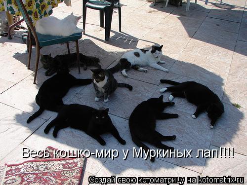 Котоматрица: Весь кошко-мир у Муркиных лап!!!!