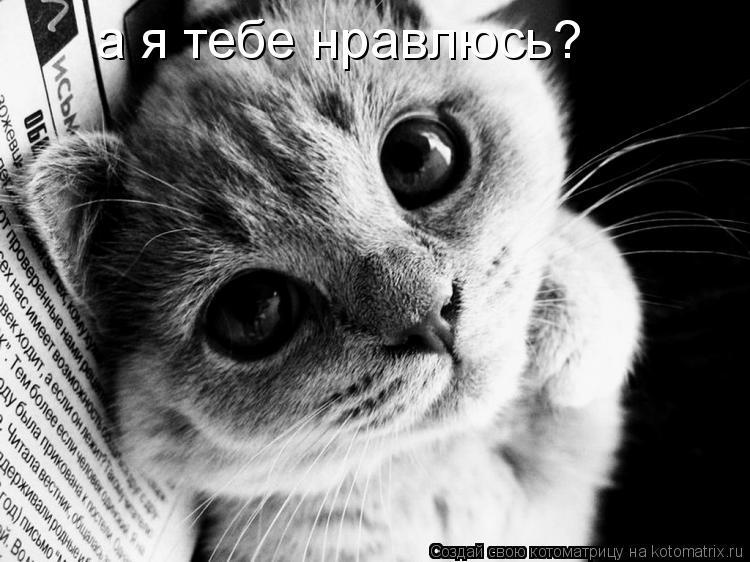 Котоматрица: а я тебе нравлюсь?