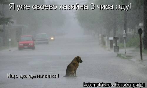 Котоматрица: Я уже своево хазяйна 3 чиса жду!  Ищо дождь начился!