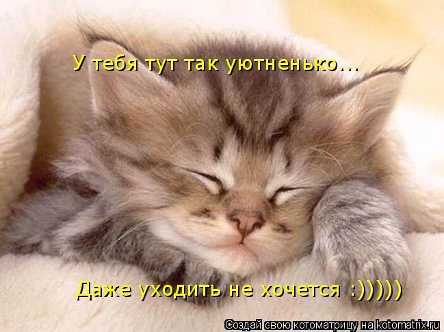 Котоматрица: У тебя тут так уютненько... Даже уходить не хочется :)))))