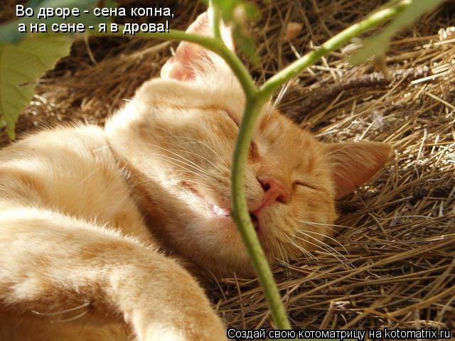 Котоматрица: Во дворе - сена копна, а на сене - я в дрова!