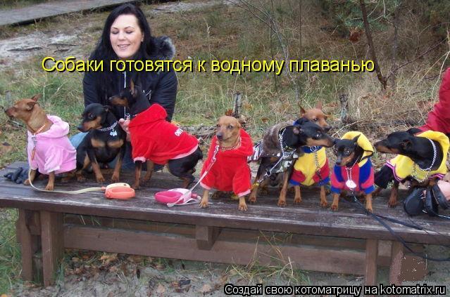 Котоматрица: Собаки готовятся к водному плаванью