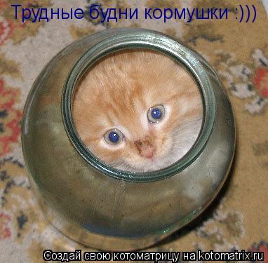 Котоматрица: Трудные будни кормушки :)))