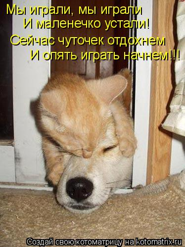 Котоматрица: Мы играли, мы играли И маленечко устали! Сейчас чуточек отдохнем И опять играть начнем!!!