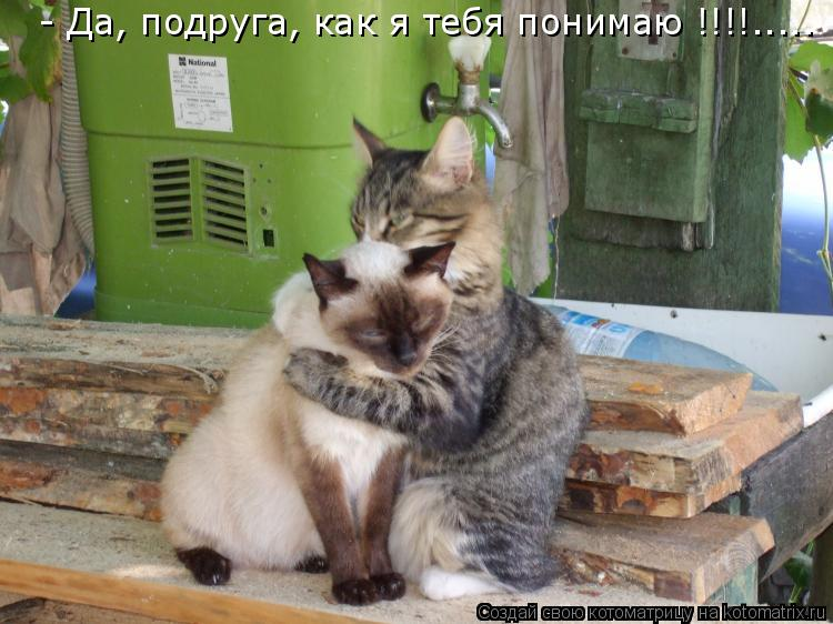Котоматрица: - Да, подруга, как я тебя понимаю !!!!.....
