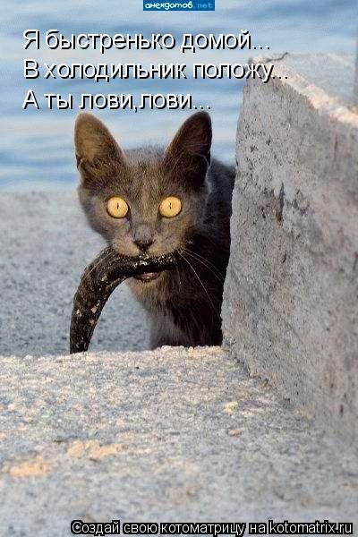 Котоматрица: Я быстренько домой... В холодильник положу... А ты лови,лови...