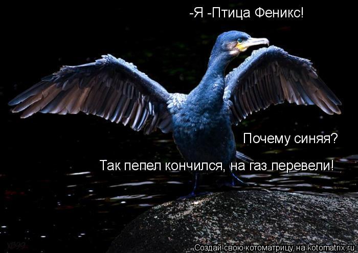 Котоматрица: -Я -Птица Феникс! Почему синяя? Так пепел кончился, на газ перевели!