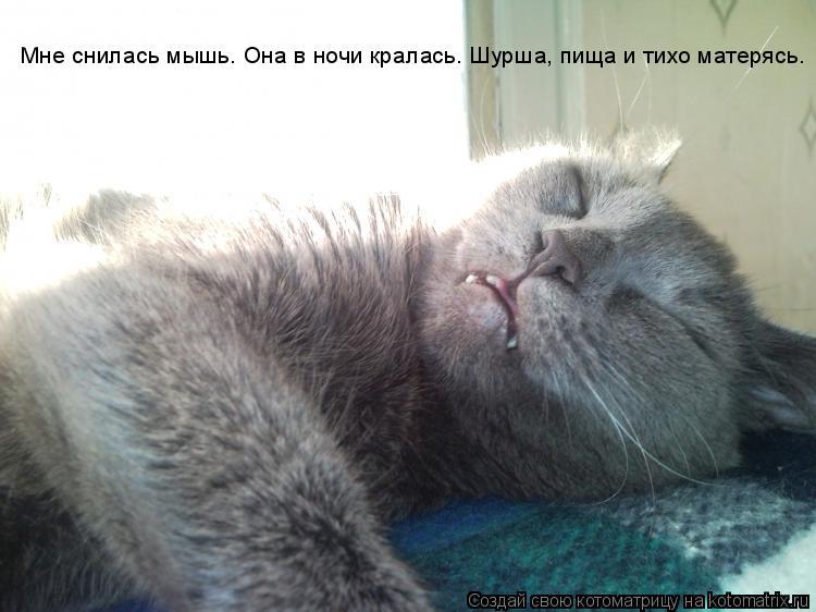 Котоматрица: Мне снилась мышь… Она в ночи кралась. Шурша, пища и тихо матерясь.