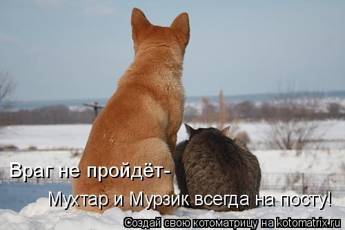 Котоматрица: Враг не пройдёт- Мухтар и Мурзик всегда на посту!