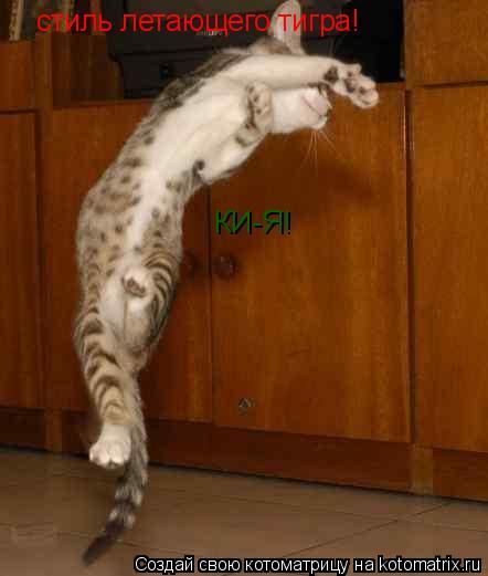 Котоматрица: стиль летающего тигра! КИ-Я!