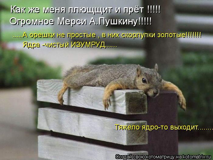 Котоматрица: Как же меня плющщит и прёт !!!!! Огромное Мерси А.Пушкину!!!!! .....А орешки не простые , в них скорлупки золотые!!!!!!! Ядра -чистый ИЗУМРУД...... Тя