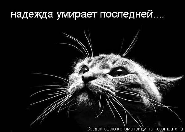 http://kotomatrix.ru/images/lolz/2009/05/08/Cu.jpg