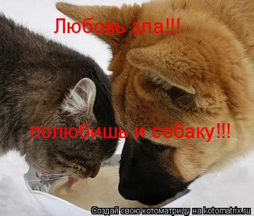 Котоматрица: Любовь зла!!! полюбишь и собаку!!!