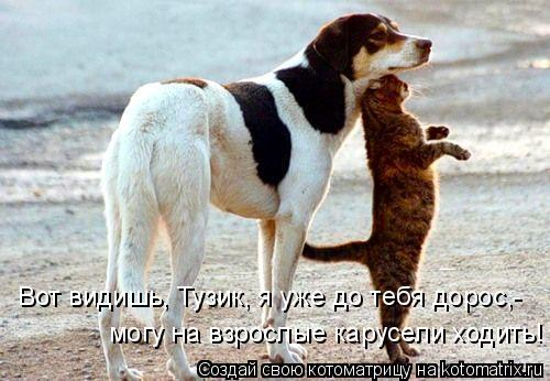 Котоматрица: Вот видишь, Тузик, я уже до тебя дорос,- могу на взрослые карусели ходить!