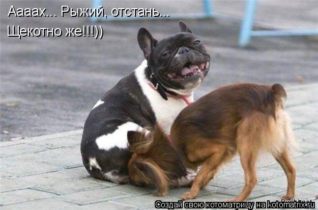 Котоматрица: Аааах... Рыжий, отстань... Щекотно же!!!))