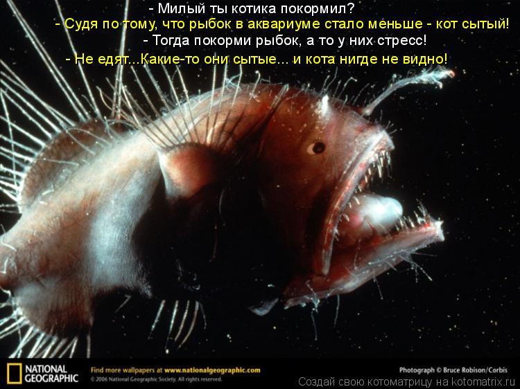 Котоматрица: - Милый ты котика покормил? - Судя по тому, что рыбок в аквариуме стало меньше - кот сытый! - Тогда покорми рыбок, а то у них стресс! - Не едят...Ка
