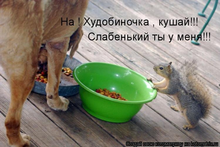 Котоматрица: На ! Худобиночка , кушай!!! Слабенький ты у меня!!!