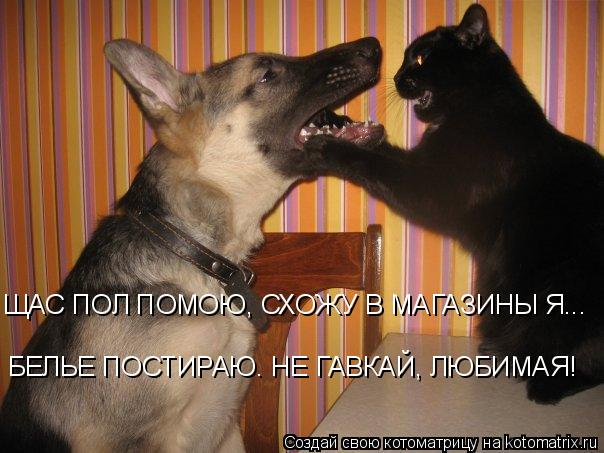 Котоматрица: ЩАС ПОЛ ПОМОЮ, СХОЖУ В МАГАЗИНЫ Я... БЕЛЬЕ ПОСТИРАЮ. НЕ ГАВКАЙ, ЛЮБИМАЯ!
