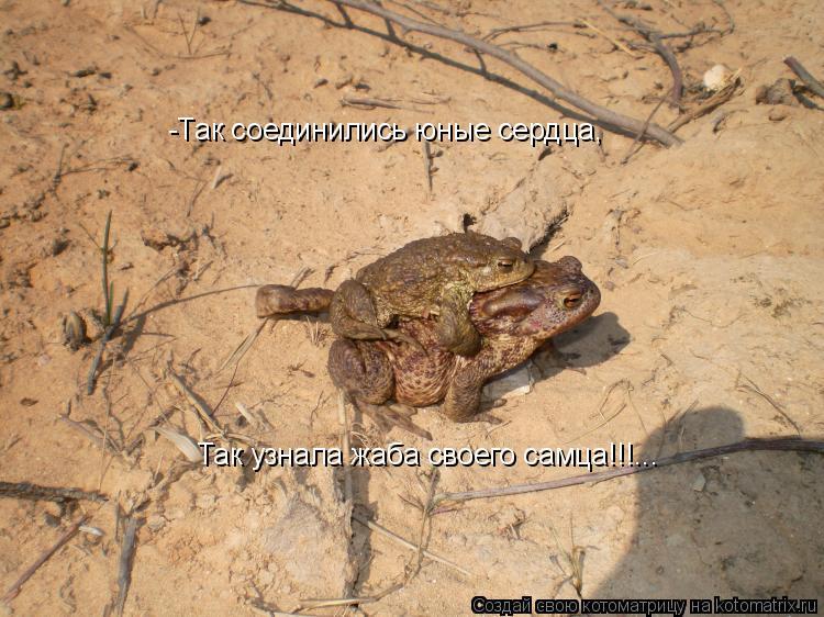 Котоматрица: -Так соединились юные сердца,  Так узнала жаба своего самца!!!...
