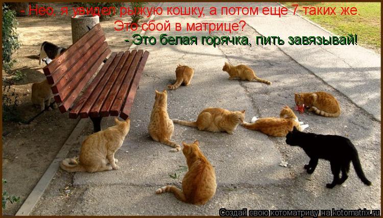 Котоматрица: Это сбой в матрице?  - Это белая горячка, пить завязывай! - Нео, я увидел рыжую кошку, а потом еще 7 таких же.