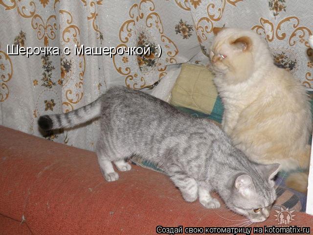 Котоматрица: Шерочка с Машерочкой :)