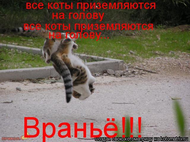Котоматрица: все коты приземляются на голову все коты приземляются на голову... Враньё!!!